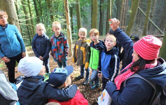 Kinder und Betreuer erkunden den Wald